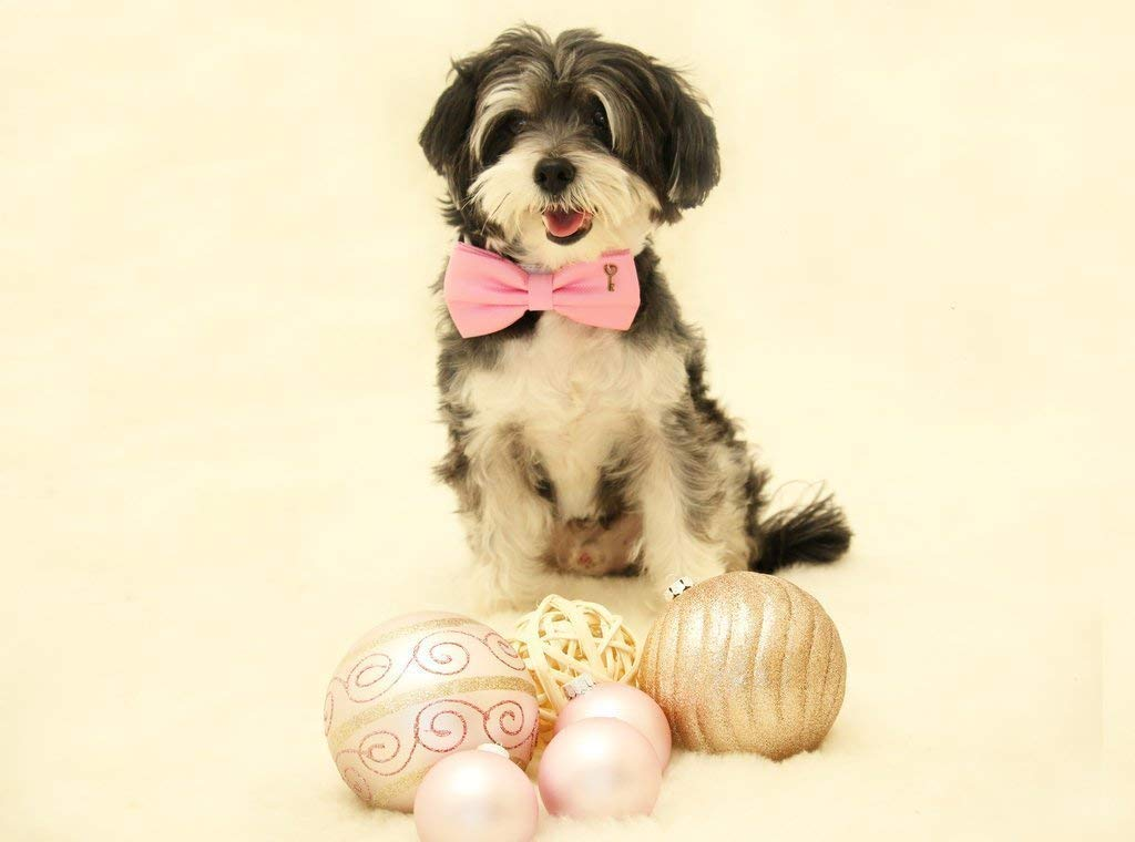 leather heart Key pink dog collar Pink Dog Bow Tie collar Cat bow tie collar dog of honor handmade dog collar