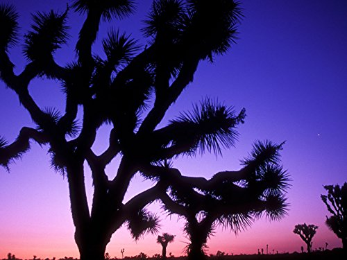 pinnacles-to-joshua-tree-the-san-andreas