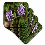 3dRose TDSwhite – Summer Seasonal Nature Photos - Floral Twin Blue Brodea Flowers - set of 4 Ceramic Tile Coasters (cst_284513_3)