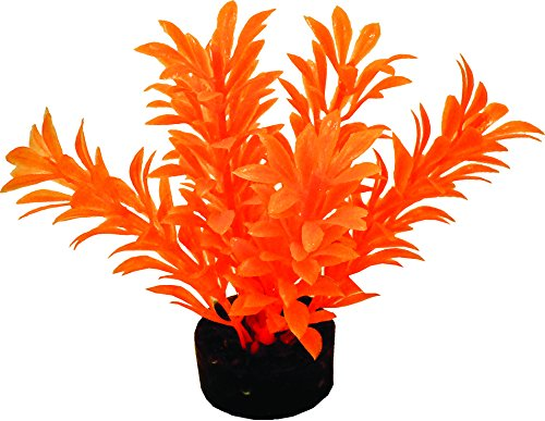 Burst Tank (BLUE RIBBON PET PRODUCTS 030157016883 Colorburst Florals Exotic Mini Plant, Neon Orange)
