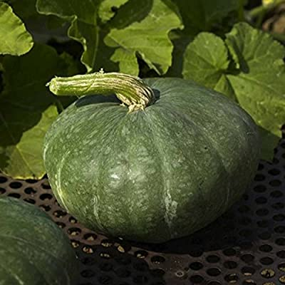 Sweet Meat Winter Squash Garden Seeds - Heirloom, Non-GMO - Vegetable Gardening Seed by Mountain Valley Seeds