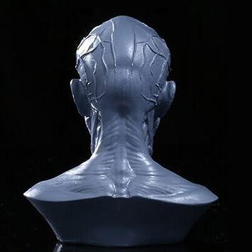 Amazon.de: Gazechimp 10cm Mensch Modell Anatomie Schädel Kopf Muskel ...