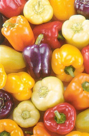 - Sweet Bell Pepper 50 Seeds-Red,Gold,Purple,Orange,White