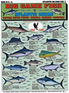 Tightlines Chart 1 Big Game Fish Id Chart