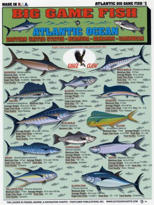Tightlines Chart #1 - Big Game Fish Id Chart - Atlantic (Blackfin Tuna)