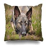 Ahawoso Throw Pillow Cover Square 16x16 Purple Down German Shepherd Dog Cute Grey Heath Heather Moor Sheepdog Design Zippered Cushion Case Home Decor Pillowcase