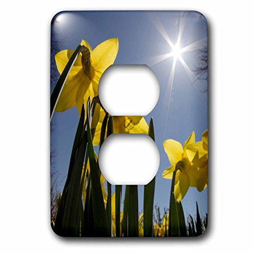 3dRose lsp_205277_6 Daffodils, Spring, Freeport, Maine 2 Plug Outlet - Outlets Maine Freeport