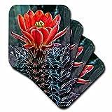 3dRose cst_32341_3 Decorative Colorful Garden Botanic Classic Plant SW Southwest Desert Cactus Red Flower-Ceramic Tile Coasters, Set of 4