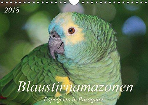 Blaustirnamazonen - Papageien in Paraguay (Wandkalender 2018 DIN A4 quer): Zahm, aber frei! (Monatskalender, 14 Seiten ) (CALVENDO Tiere) [Kalender] [Apr 01, 2017] Schneider, Bettina