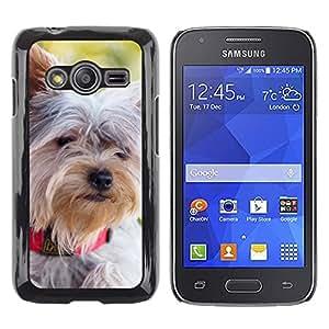 Paccase / SLIM PC / Aliminium Casa Carcasa Funda Case Cover - Schnauzer Norfolk Terrier Havanese - Samsung Galaxy Ace 4 G313 SM-G313F