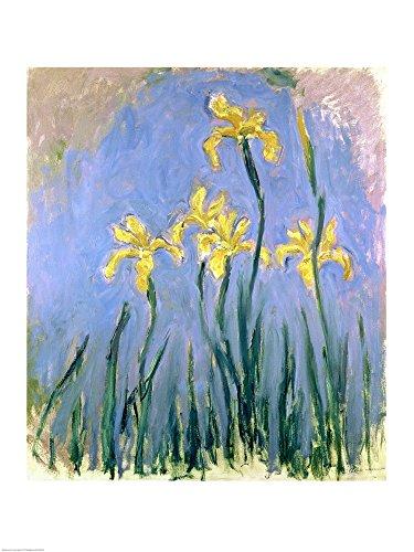 The Yellow Irises, c.1918-25 by Claude Monet Art Print, 17 x 22 inches ()