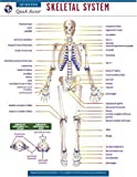 Skeletal System - REA's Quick Access Reference Chart (Quick Access Reference Charts)