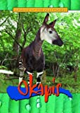 Okapis (Animals of the Rain Forest)