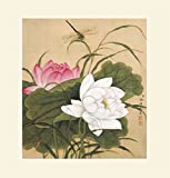 """INK WASH Modern Fine Art Reproduction Asian Chinese Painting White Pink Buddha Lotus Flower Decor Flowers and Dragonfly Paintings Floral Artwork Fine Art for Living Room Office Decor 19""""x20"""""""