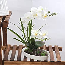 LianLe Artificial Flowers Real Touch Simulation Phalaenopsis Orchid Potted for Decoration (#6 White)