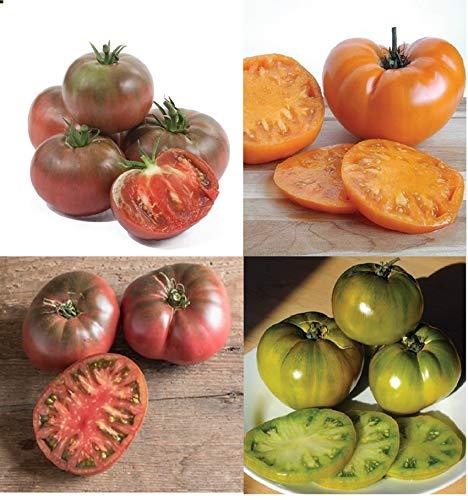 (David's Garden Seeds Collection Set Tomato Beefsteak Rainbow Open Pollinated YN9155 (Multi) 4 Varieties 200 Seeds (Non-GMO, Organic, Heirloom))
