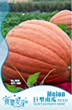 Fruits and vegetables seeds extra large pumpkin oversized pumpkin seeds 6 PCS / bag flower pots planters Original packaging