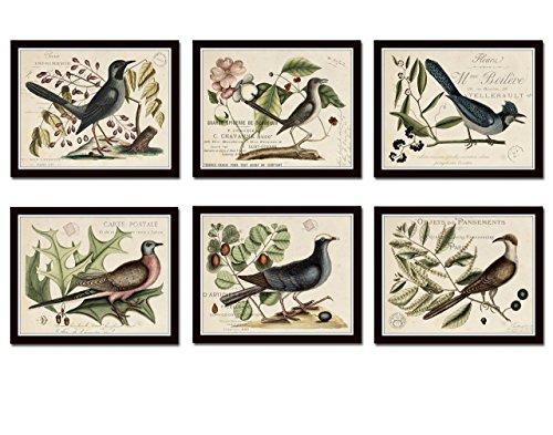 Vintage Bird and Botanical Print Set No.6 Set of 6 Giclee Prints Home Decor Wall Art - Unframed