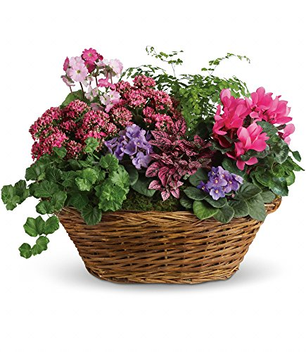 Chicago Flower Co. - Simply Chic Mixed Plant Basket - Fresh and Hand Delivered