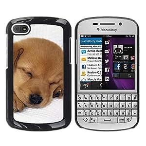 PC/Aluminum Funda Carcasa protectora para BlackBerry Q10 Puppy Labrador Retriever Light Brown Dog / JUSTGO PHONE PROTECTOR