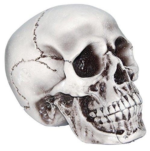 Foam Skull Halloween Decoration (Foam Skull)