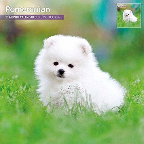 Magnet & Steel 2017 Pomeranian Calendar, Traditional Wall Calendar