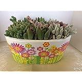 Succulent Oasis Succulent Arrangement in Oval Ceramic Flower Planter