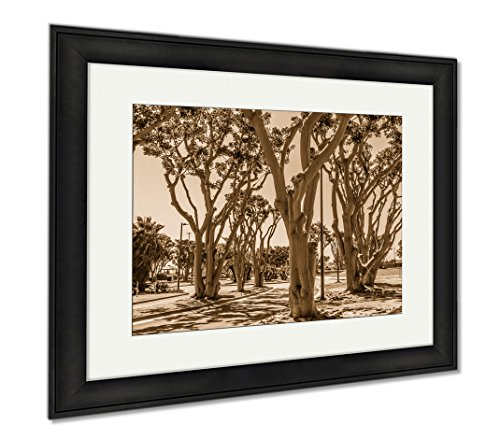 Ashley Framed Prints Coral Trees Lining A Street At Embarcadero Park South In San Diego California, Wall Art Home Decoration, Sepia, 26x30 (frame size), Black Frame, - Promenade Coral Springs The