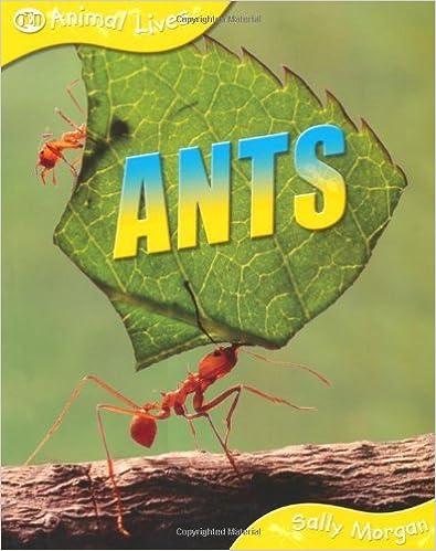 Ants (Animal Lives) by Sally Morgan (2009-02-01)