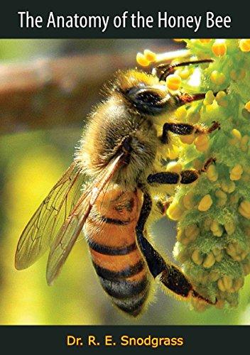 The Anatomy Of The Honey Bee Dr R E Snodgrass Amazon