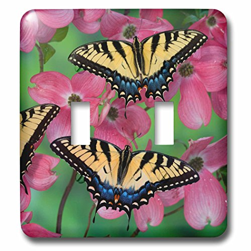 3dRose Danita Delimont - Butterfly - Trio of Eastern Tiger Swallowtail on Pink Dogwood blooms - Light Switch Covers - double toggle switch (lsp_249975_2) ()