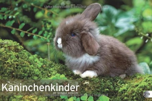 kaninchenkinder-posterkalender-2013