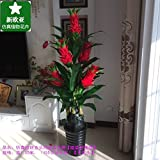 Sproud The Rich Tree Plants Bonsai Bonsai Tree Flowers Off The Living Room Decoration,G