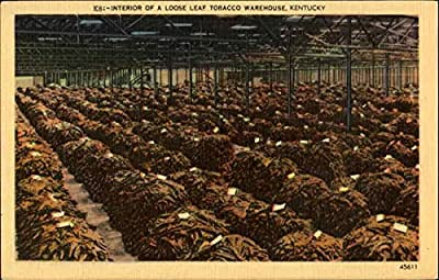 Interior Of A Loose Leaf Tobacco Warehouse Kentucky Original Vintage Postcard