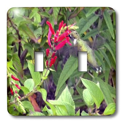 - 3dRose lsp_33112_2 Bee Balm And Hummingbird Toggle Switch, Multicolor