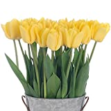 Stargazer Barn - 24 Stems Bright Yellow Flight Tulips with Rustic Décor Style Galvanized Vase - Direct From Farm - 2 Dozen Yellow Tulips - Sustainably Grown in California - Yellow Flowers
