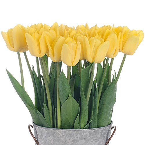 Stargazer Barn - 24 Stems Bright Yellow Flight Tulips with Rustic Décor Style Galvanized Vase - Direct From Farm - 2 Dozen Yellow Tulips - Sustainably Grown in California - Yellow Flowers by Stargazer Barn