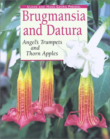 Brugmansia and Datura: Angel