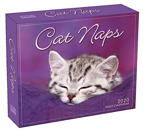 Cat Naps 2020 Boxed Daily Calendar