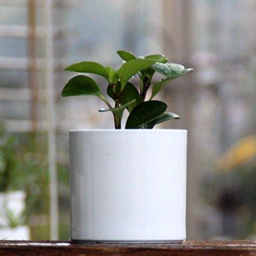 er Pot, Round Cylinder Shape, Pure White Color (White Floral Pot)