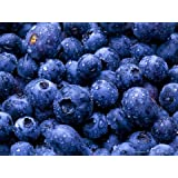 BLUEBERRIES FRESH PRODUCE FRUIT VEGETABLES PINT 10 OZ