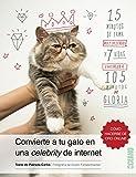 Convierte a tu gato en una celebrity de internet