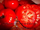 Beefsteak Tomato Seeds Many Sizes to 2LB Easy Grow Heirloom Classic 95 (10)