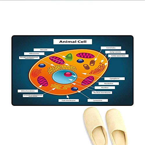 Bath Mat Science at School Cell of an Animal Colorful Display Medical Studies Nucleus Doormats for Inside Non Slip Backing Multicolor 16