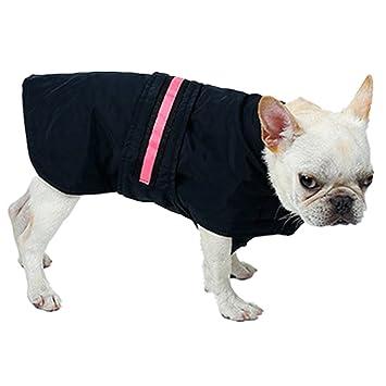 BURFLY - Chaleco de seguridad LED para perro, impermeable, reflectante, para invierno: Amazon.es: Instrumentos musicales
