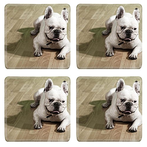 showing french bulldog - 7