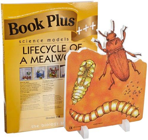 Mealworm Life Cycle (Book Plus Mealworm Life Cycle Foam Model, 10