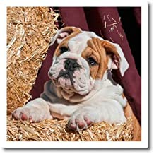 3dRose Danita Delimont - Puppies - Bulldog Puppy lying on hay bales, MR - 8x8 Iron on Heat Transfer for White Material (ht_258128_1)