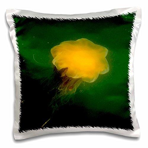 Danita Delimont - Marine Life - AK, Inside Passage. Lions Mane Jellyfish marine life - US02 TDR0187 - Trish Drury - 16x16 inch Pillow Case (pc_87756_1) (Saginaw Marina)