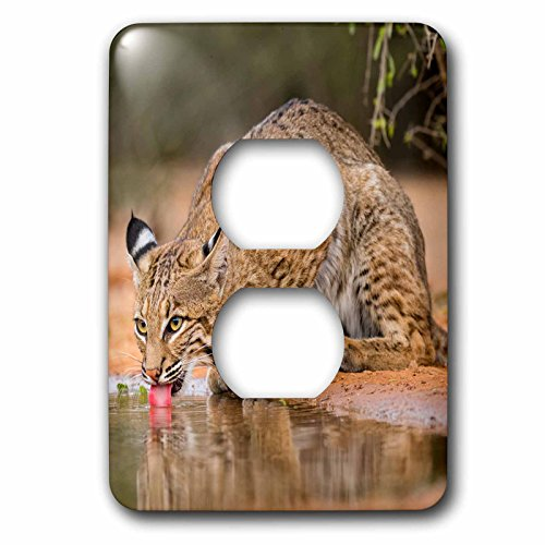 (3dRose Danita Delimont - Big Cats - Bobcat, Lynx Rufus, drinking - Light Switch Covers - 2 plug outlet cover (lsp_279452_6))